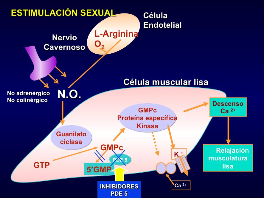 Estimulación sexual contra la impotencia